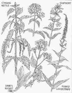 July Weeds 2