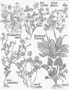 June Weeds