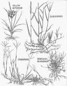 May Weeds 2