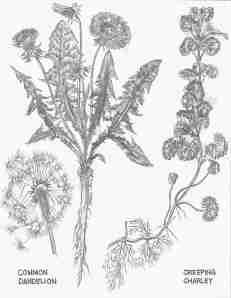 May Weeds