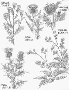 November Weeds