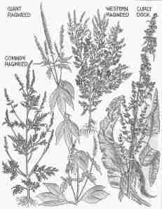 October Weeds