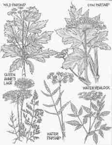 September Weeds