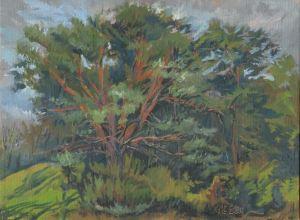 Wirth Park Pine