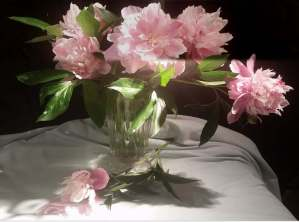 Pink Peonies model for still life painting